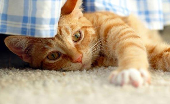 Minnie's Brother Orange [3] kitten