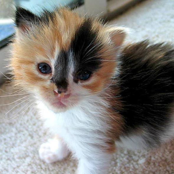 JayJay  kitten