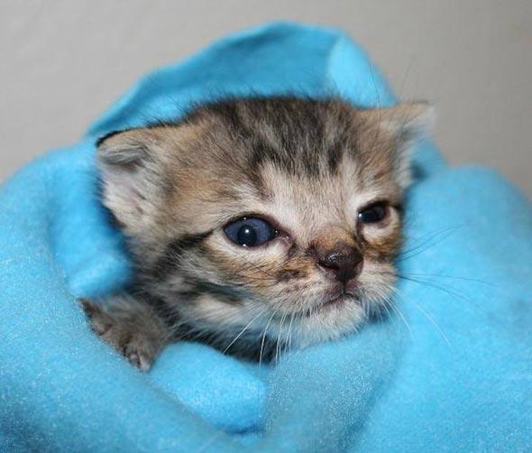 Milo  kitten