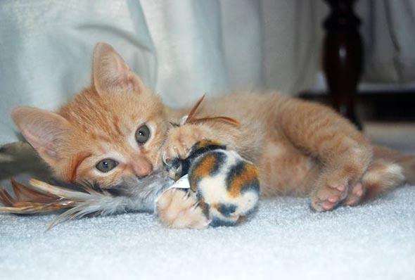 OJ [5] kitten
