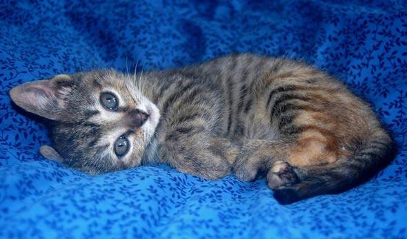 Tula [5] kitten