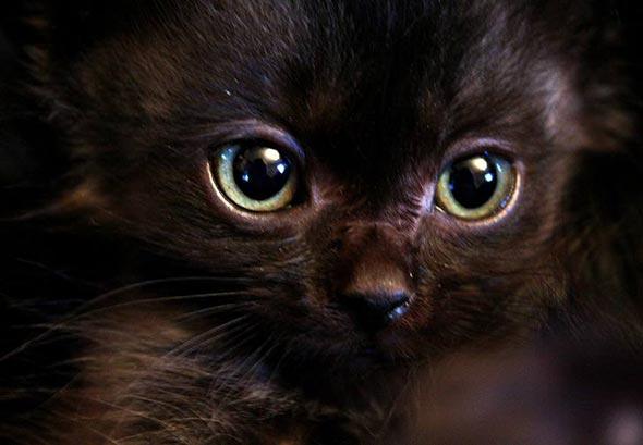 Dr. [4] kitten