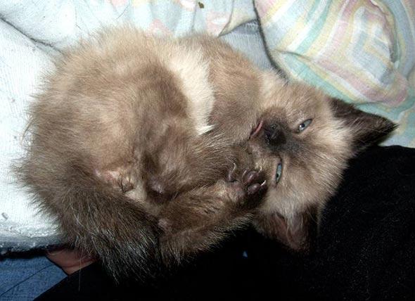 Keiko [4] kitten