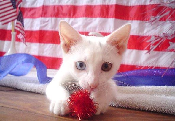 Saltine [4] kitten