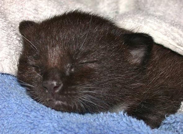 Kasey [5]  kitten