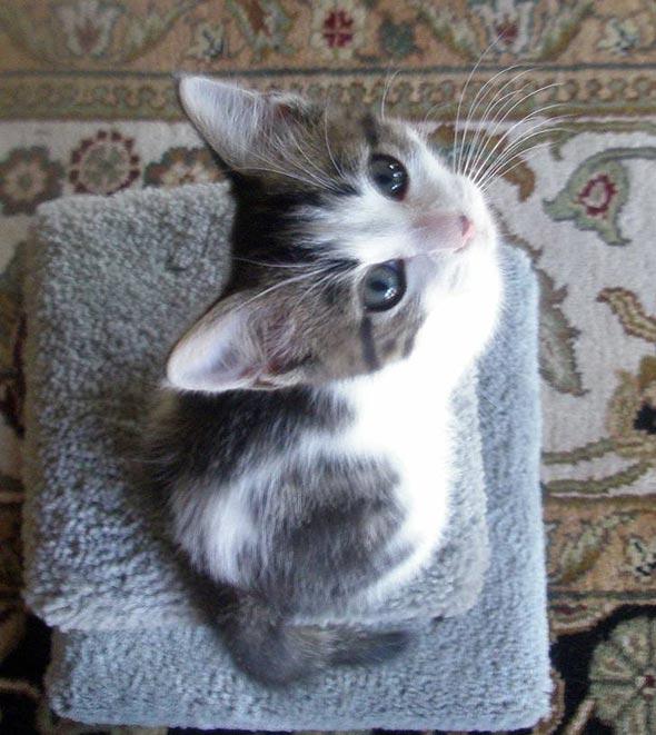 Bianca [4]  kitten