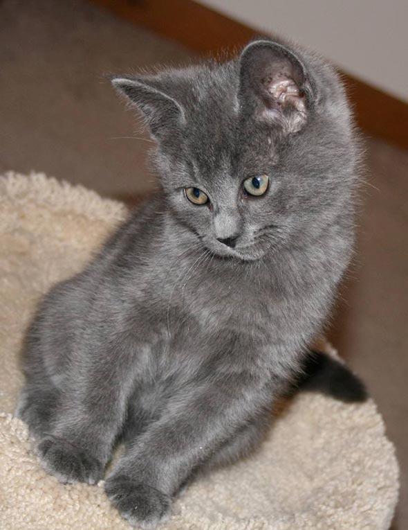 Charlie [5]  kitten