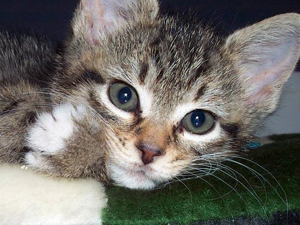 Janice [4]  kitten