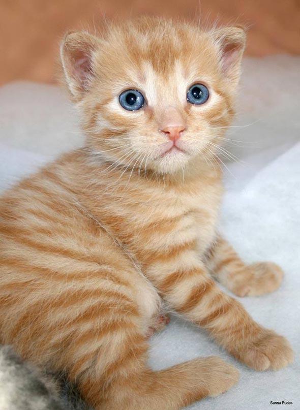 Vili [5]  kitten