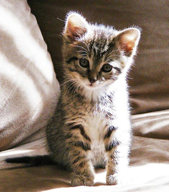 Kiwi [5]  kitten