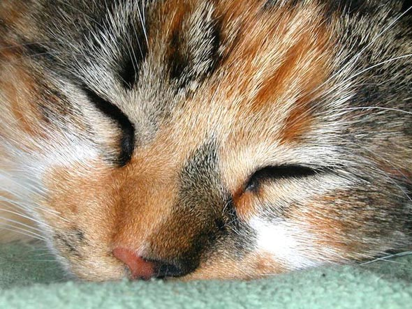 Lucy [5]  kitten