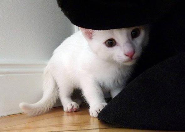 Harald [3] kitten