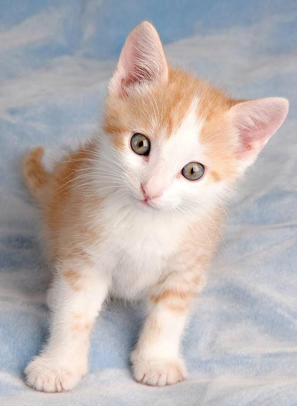 Murray [3] kitten