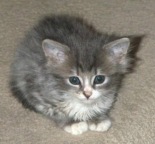 Holly [3] kitten