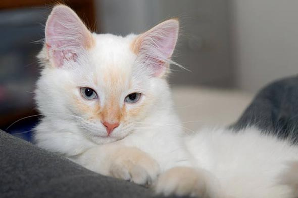 Benny [3] kitten