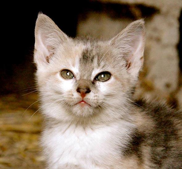Ohio Barn Kittens: Part 1 of 4  kitten