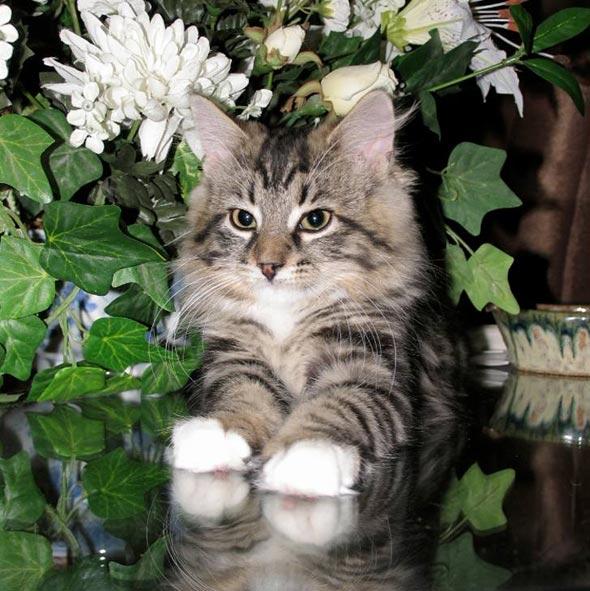 Charlie [3] kitten