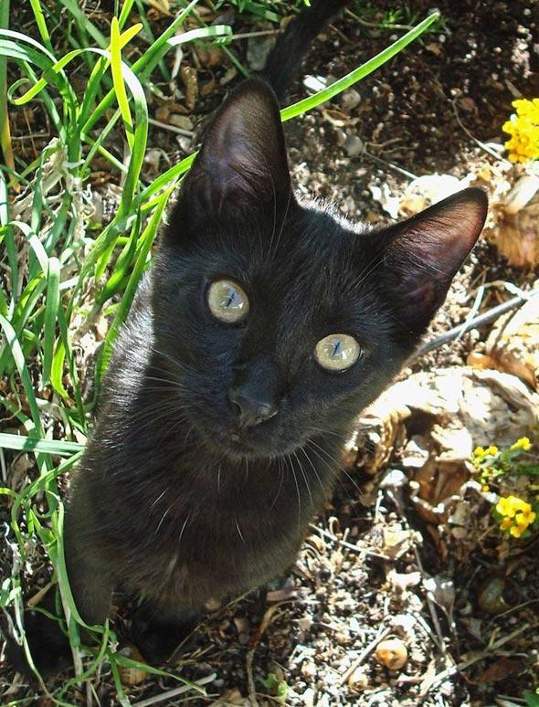 Mojo [5] kitten