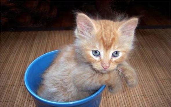 Porkchop [4] kitten