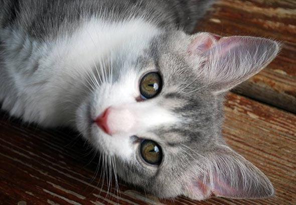 Echo [5] kitten