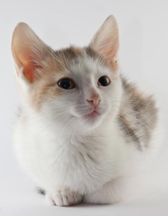 Mira [4] kitten