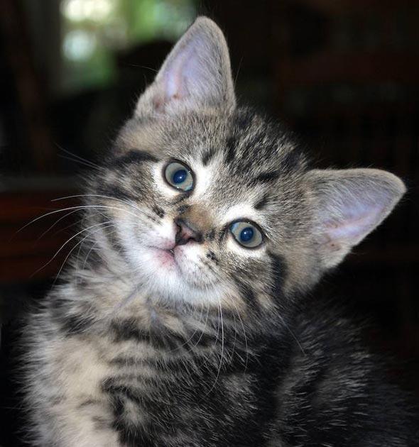 Casey [5]  kitten