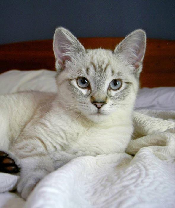 Sofie [5]  kitten