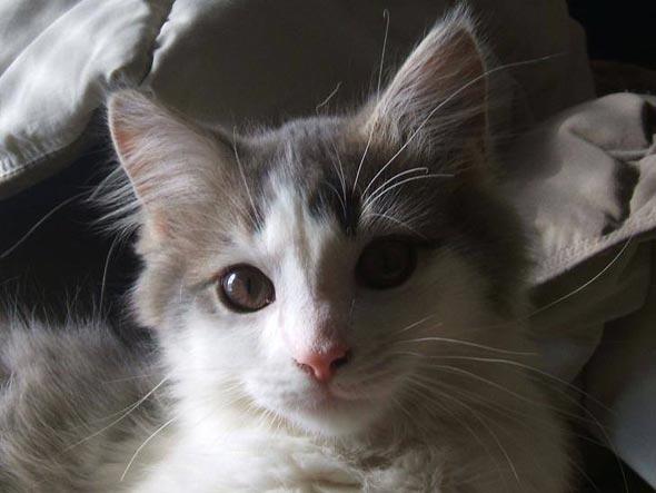 Pablo [5] kitten