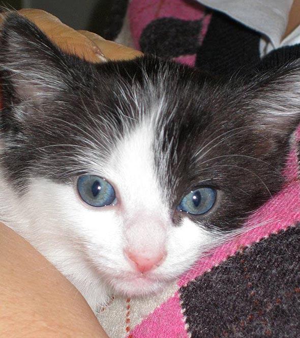 Marcos [5] kitten