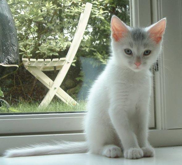 Ulf [4]  kitten