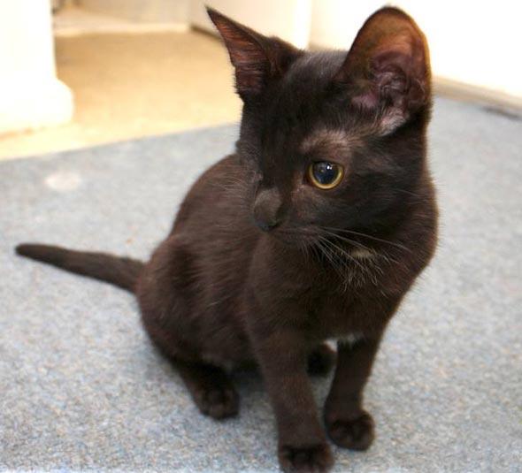 Iris [5] kitten