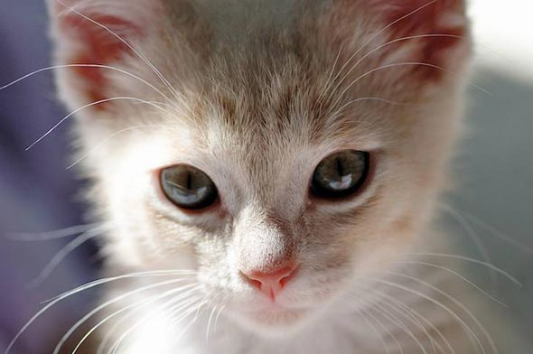 Casper  kitten