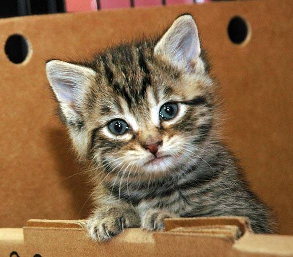 Larry [3] kitten