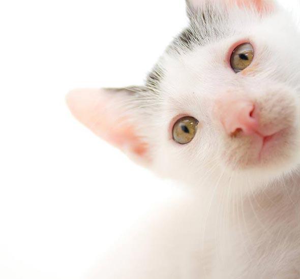Cassidy [3] kitten