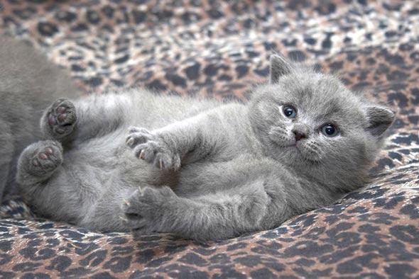 Betty's Kittens [5] kitten