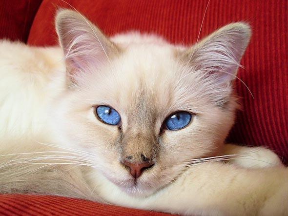 Jambo [3]  kitten