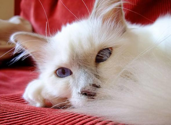 Leonardo [4] kitten