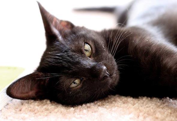 Nevada [4] kitten