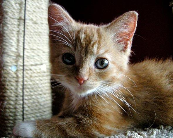 Penny [5]  kitten