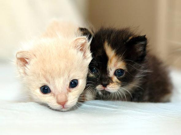 Encore: Casper and Wendy [5]  kitten
