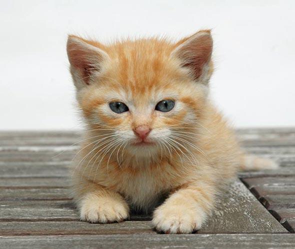 Ema (and Emi) [5]  kitten