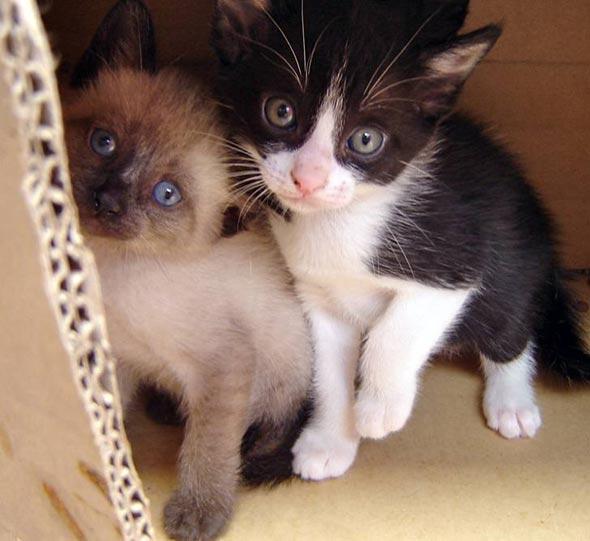 Kitty and Kal-El [5] kitten