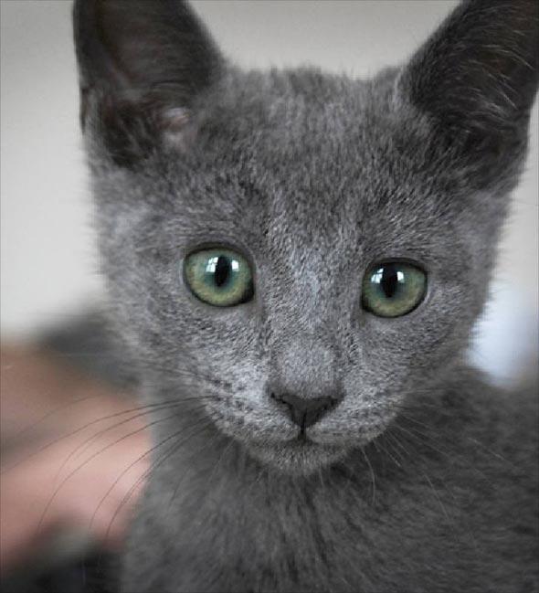 Mokona [4] kitten