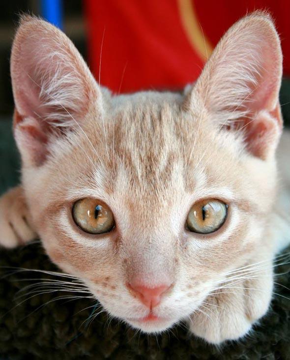 Carson Penn [5] kitten