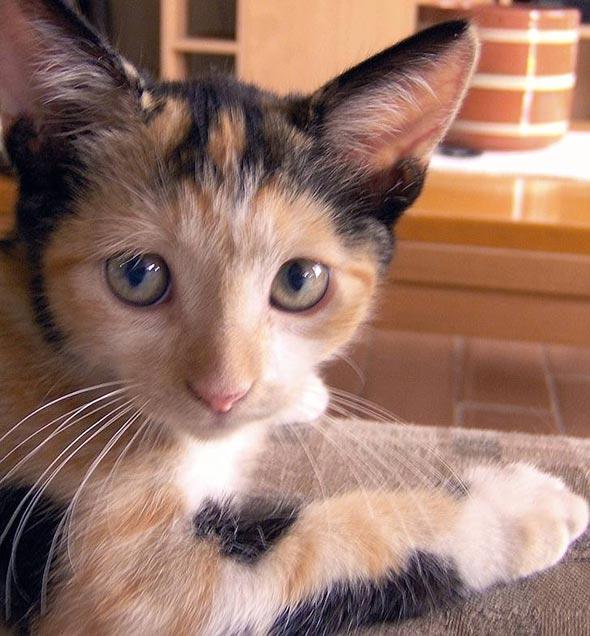 Ambar Mimieux [5]  kitten