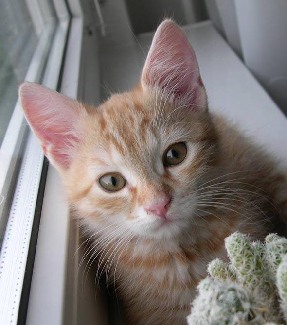 Frici [3]  kitten