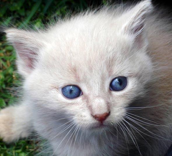 Diego [4]  kitten