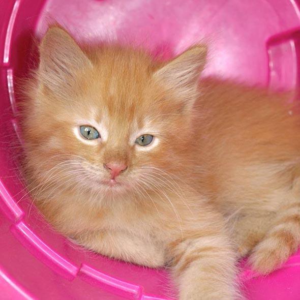 Sunny [4]  kitten