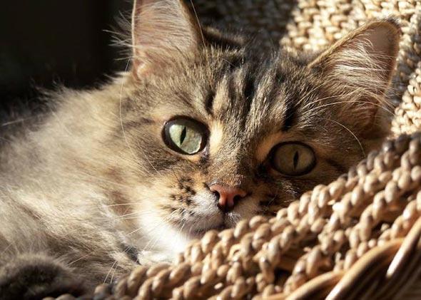 Nick  kitten