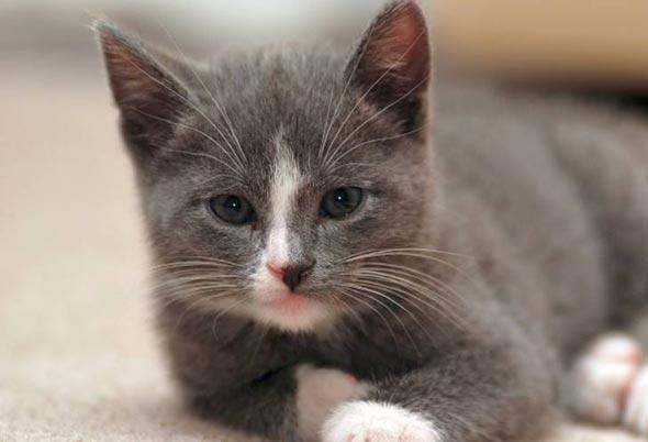 Dudu [5] kitten